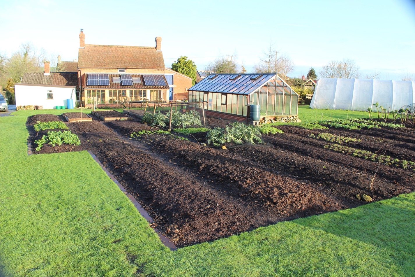 Homeacres 12/02.2016, very few weeds have grown on these beds through the exceptionally mild winter. Undisturbed soil sees less weed seeds germinating, compost mulch helps.