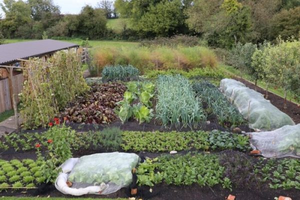 Homeacres October 2017 autumn and winter vegetables