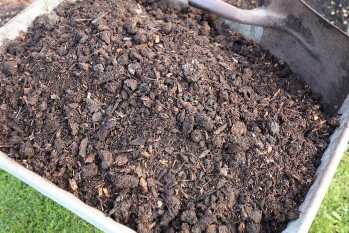 Compost in wheelbarrow ready to spread