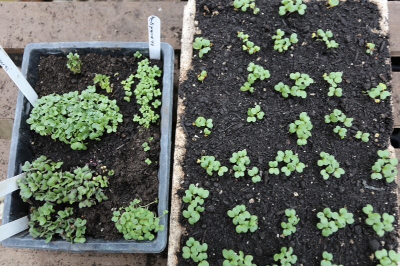 Different sowing methods, seed tray and multisow