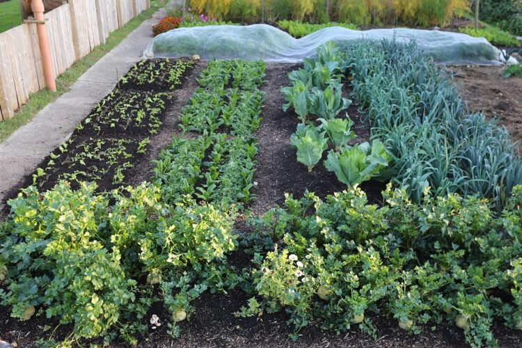 Veg growing which have not been rotated