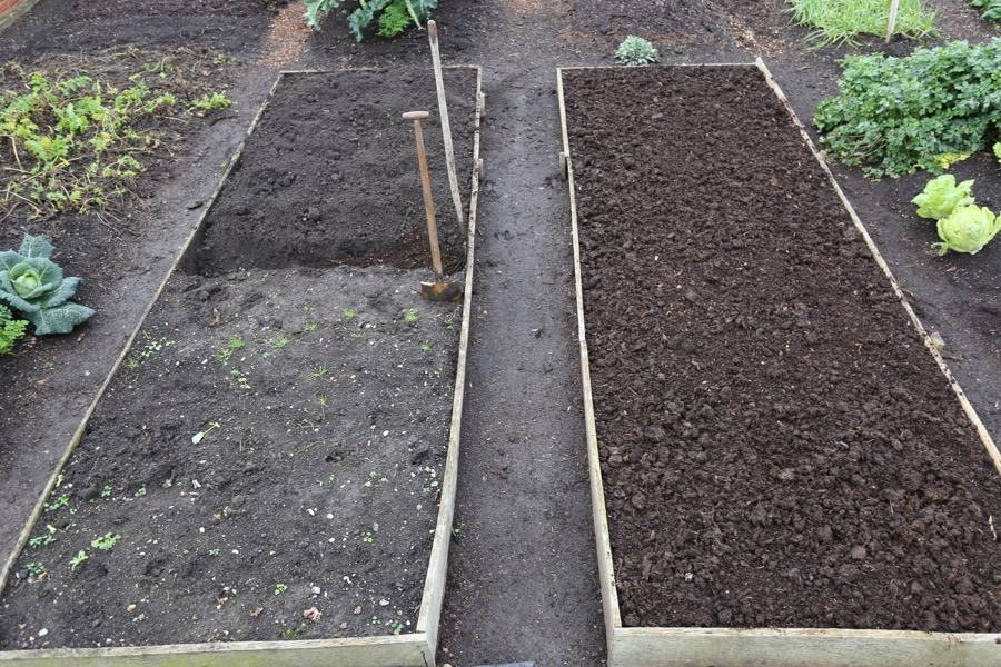 Halfway through, compost goes in trenches