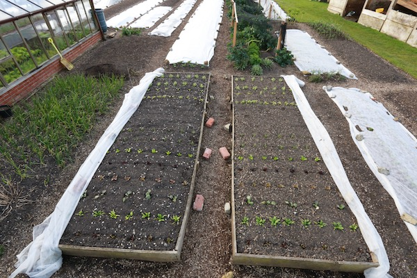 New plantings by 2nd April after two weeks under fleece