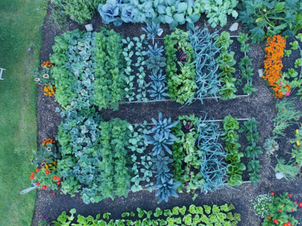 Overhead view 16th August with dig bed top and no dig bottom