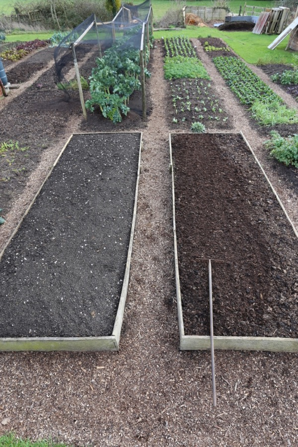 Dig and no dig bed trial