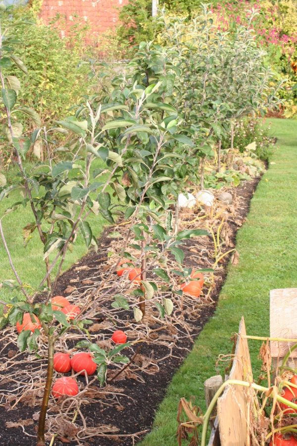 27c. Same fruit trees and more squash a year later in October 2014