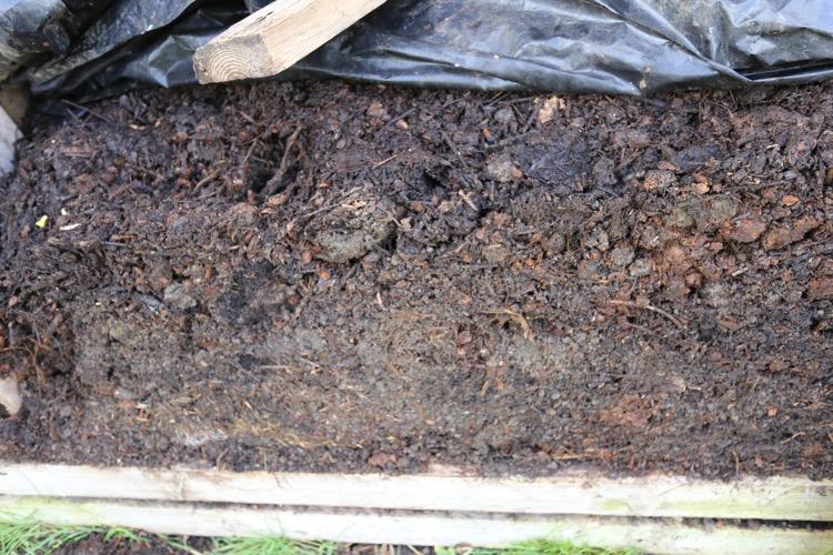 Compost half ripe no dig