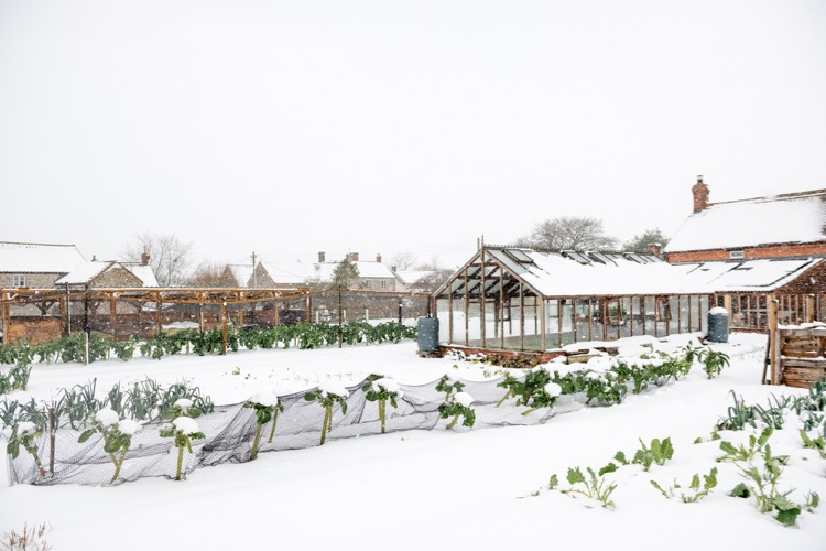 snow falling at Homeacres garden