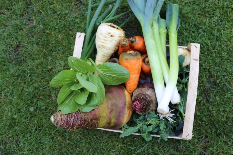Winter veg selection 8th March no dig