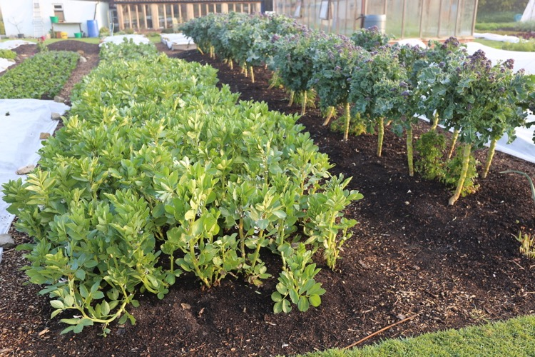 Beds have compost, a little wood on paths