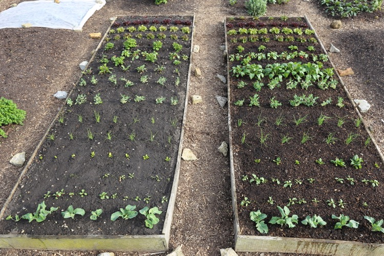 Comparing growth 18th April, trial beds