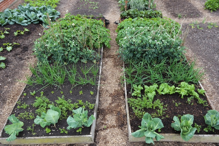 Trial beds, dig and no dig