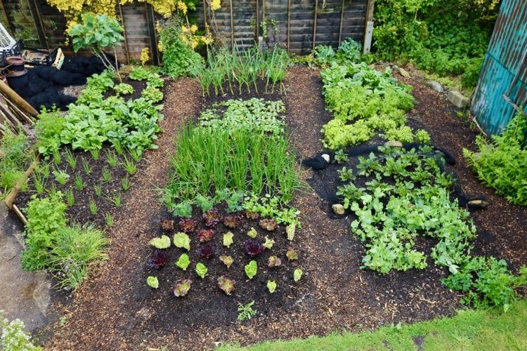 Small garden abundance, no dig