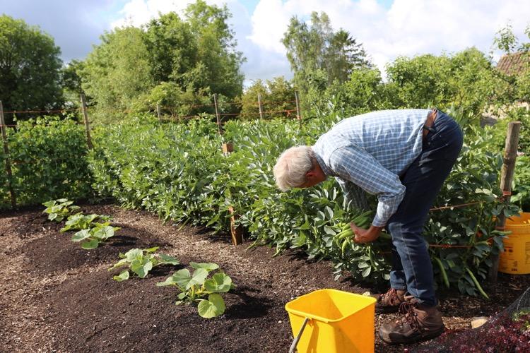 Charles picks beans