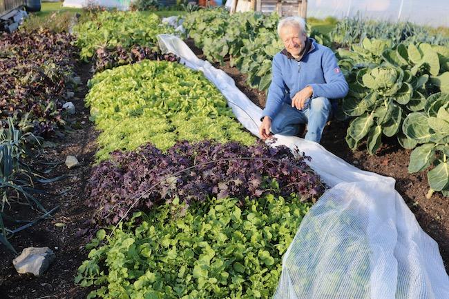 Charles Dowding October salad