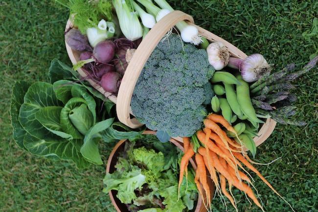 June vegetable harvests, no dig