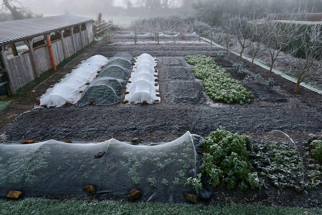 Homeacres no dig beds in winter