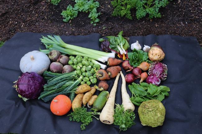 Winter vegetable harvests no dig