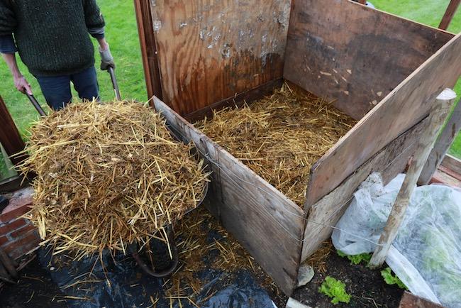Wheelbarrow of fresh horse manure