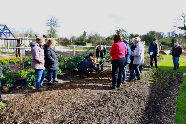 Course group planting radish multi-sown