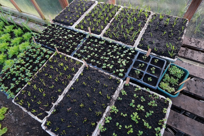 various module trays, no dig greenhouse