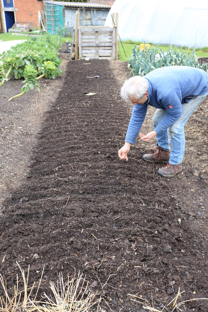 Charles sowing carrot seeds