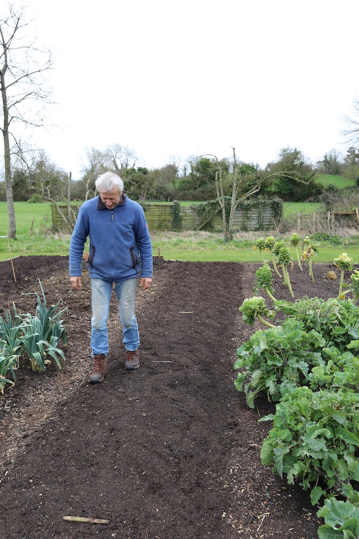 Walking on a newly sown carrot bed