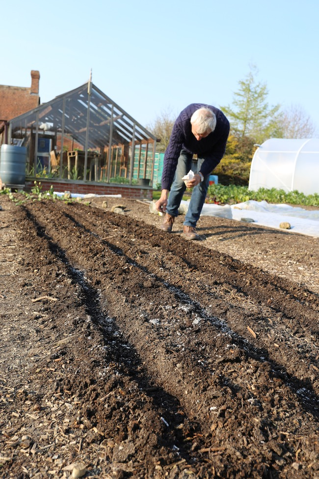 Charles sowing parsnips