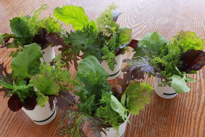 Salad leaves for flower arranging