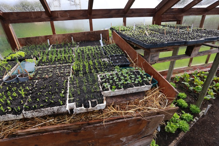 Hotbed for germination and for tender plants