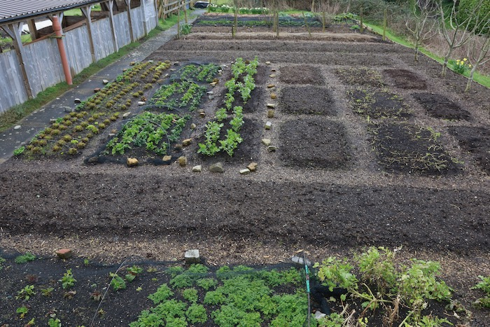 Tidy garden mid March ready to plant