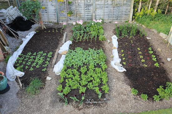 Small garden Homeacres no dig