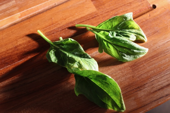 Spinach leaves for sugar test
