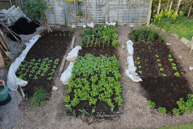 Small garden 10th April covers removed
