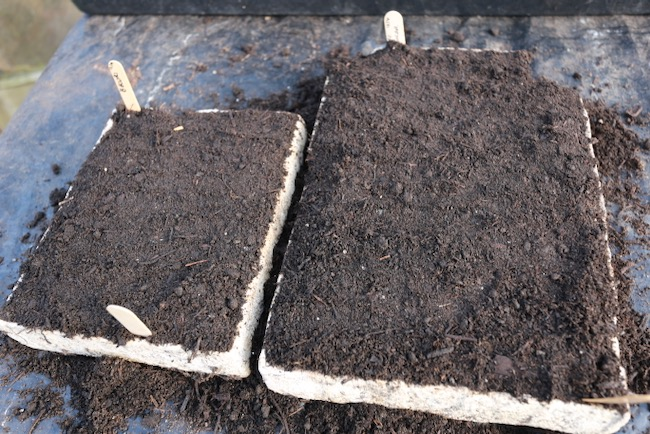 Trays covered with compost