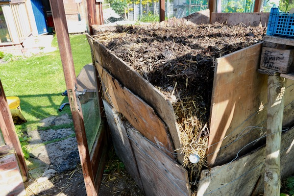 Hotbed five weeks ago, horse manure