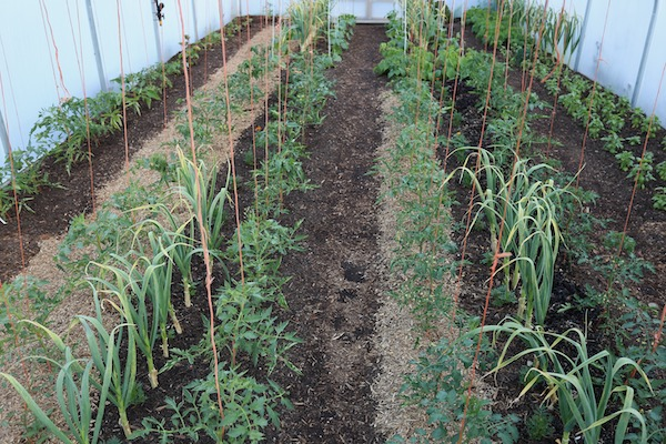 Trialling mulches of seaweed and miscanthus