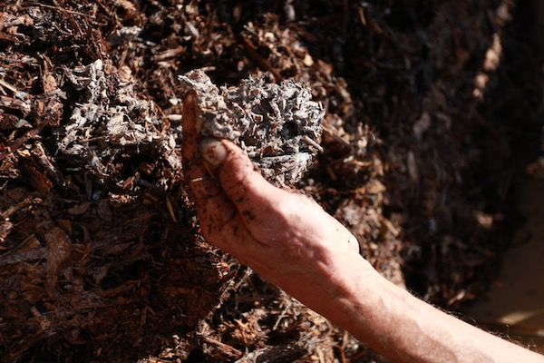 Fungal decomposition of wood chip