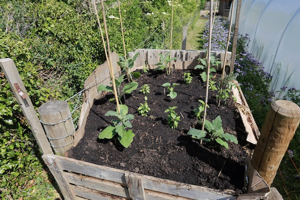 New compost heap bed now planted