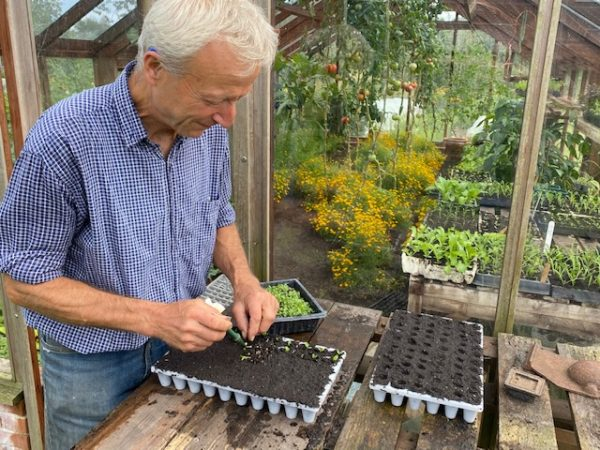 Pricking out seedlings