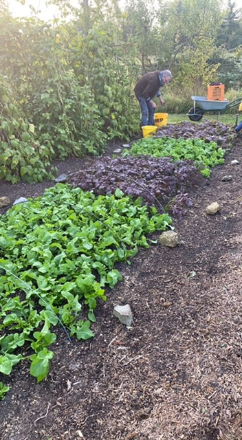 Salad rocket and mustards