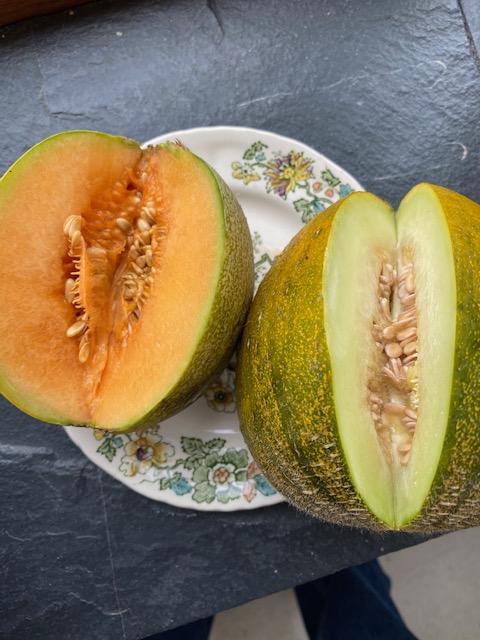 Melons Minnesota Midget & Kasakh