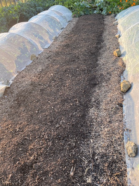 New compost for spring onions