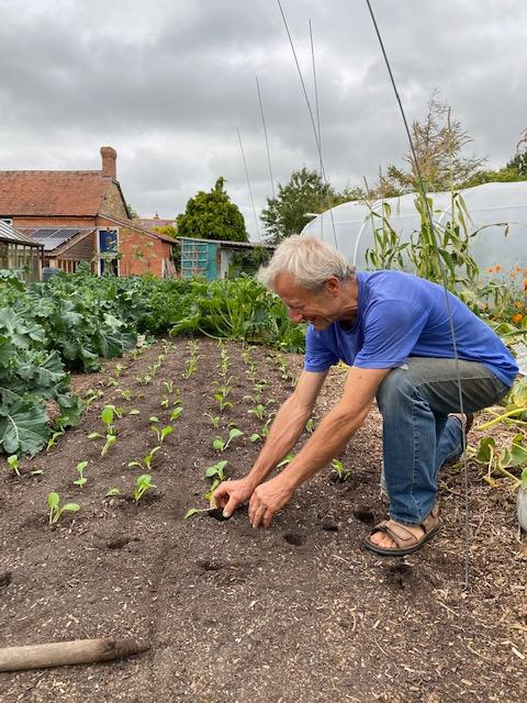 Planting pak choi 8th September