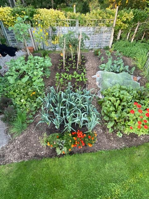 Small garden 9th September