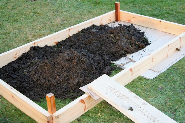 Filling the base layer of a new bed with old manure