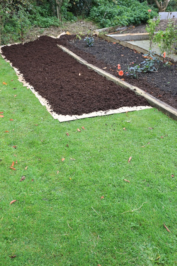 After laying cardboard then a thin initial layer of compost on top