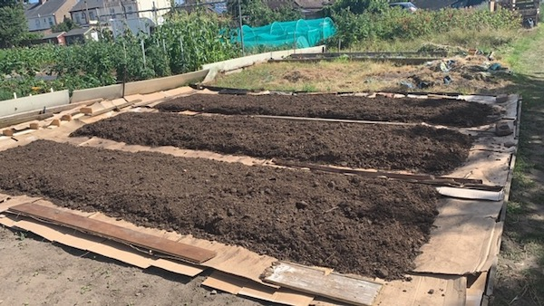 New allotment in early July, paths cardboard and beds with mushroom compost
