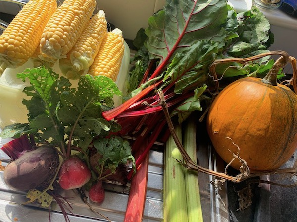 New no dig allotment produce September 2020