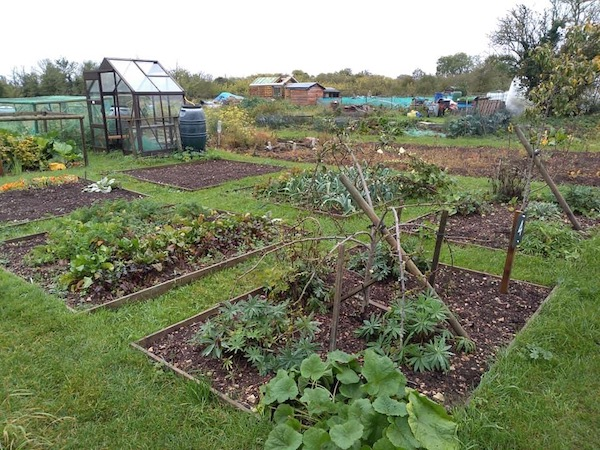 Allotment site threatened by Blenheim Palace